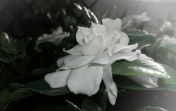 Special flowers in the garden. Special white flowers in the garden royalty free stock images