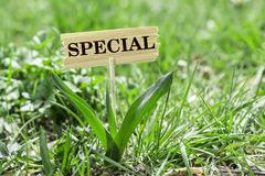 Special wooden sign. Special on wooden sign in garden with white spring flower Royalty Free Stock Photo