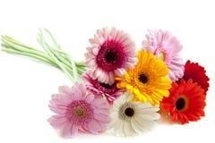 Speciale bloemen Stock Foto