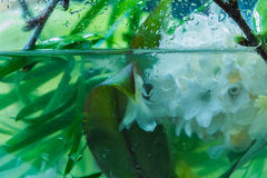 Speciale bloemensamenstelling in een water stock afbeelding