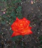 Speciale driehoekige bloem royalty-vrije stock foto's