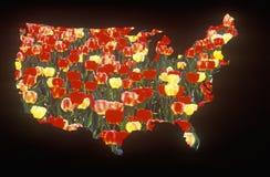 Speciale gevolgen: Overzicht van het vasteland van Verenigde Staten met tulpen Stock Foto