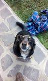 Speciale hond Stock Fotografie