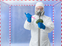 Specialist conducting experiment on broccoli Royalty Free Stock Image