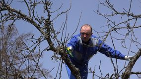Specialist garden worker doing fruit tree cut in spring on blue sky background. Specialist garden worker doing fruit tree cut in spring time on blue sky stock footage