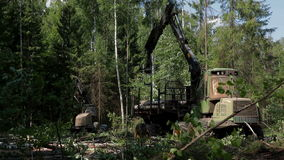 A specialized Feller Buncher saws tree trunks stock video footage