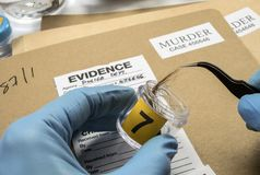 Specialized police taking shows hairs to analyze in scientific laboratory. Conceptual image royalty free stock images