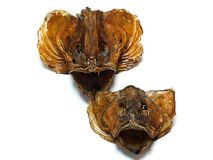 Specially crafted head fish. Dried fish heads  on white background Royalty Free Stock Images