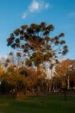 Specialt träd i Argentina i Tandil, Argentina Royaltyfri Foto