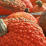Specialty Pumpkins Royalty Free Stock Photos