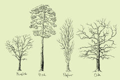 Specie dell'albero Immagine Stock