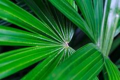 Specie della pianta in foreste tropicali Fotografie Stock