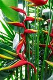 Specie della pianta in foreste tropicali Immagine Stock Libera da Diritti