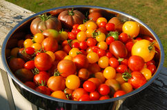 Specie differenti dei pomodori su un piatto Fotografia Stock Libera da Diritti