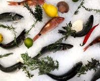 Specie differenti del pesce su ghiaccio bianco con le erbe ed il limone sulla stanza frontale di negozio immagini stock libere da diritti