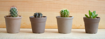Species of Cacti Stock Photos
