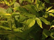 Species of endangered plants Stock Photo