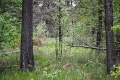 Species in het bos stock fotografie
