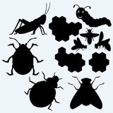 Species of insects Royalty Free Stock Photos