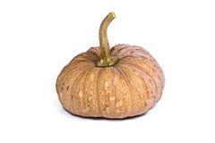 Species thai pumpkin  on white background Royalty Free Stock Photo