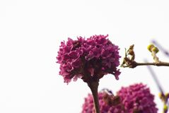 Specific lilac background. This lilac is specific colour and specific form royalty free stock image