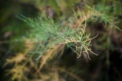 Specificera av tree Royaltyfri Bild