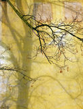 Specificera fotografi av den nakna trädkonturn på den gamla grova väggen Arkivbild