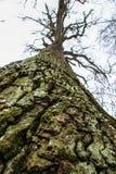 Specificera skället av ett träd Botten beskådar arkivbild