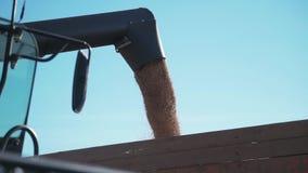 Specificerad sikt av en stadig ström av kornvete som kanaliseras till och med en sammanslutningförlängningsarm in i lastbilbehåll lager videofilmer