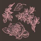 Specificerade hand drog rosor för blommauppsättning högt royaltyfri illustrationer
