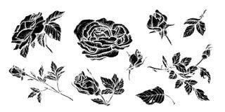 Specificerade hand drog rosor för blommauppsättning högt vektor illustrationer