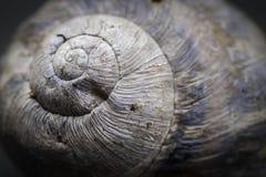 Specificera av gastropod beskjuter Royaltyfria Bilder