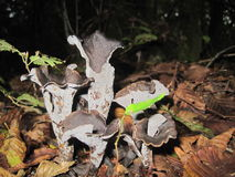 Specifik champinjon i skogen Royaltyfri Fotografi