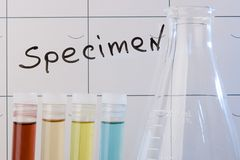 Specimen. Test tubes and erlenmeyer flask in front of a word Specimen Royalty Free Stock Photography
