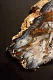 Specimen van van angst verstijfd en gemineraliseerd hout royalty-vrije stock afbeeldingen
