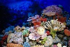 Specimens of Marine corals and fishes. royalty free stock photos