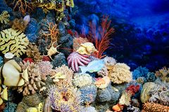 Specimens of Marine corals and fishes.  Royalty Free Stock Photo