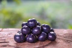 Speciosa Livistona плоды зрелые обильно в диком стоковое изображение