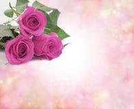 Specjalne matkowanie Niedziela menchii róże zdjęcie stock