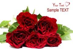 specjalne okazj róże Zdjęcie Royalty Free