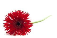 specjalny kwiat obraz stock