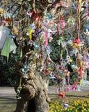 Specjalny pacyfikatoru drzewo Zdjęcie Royalty Free