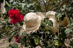 Specjalny pokaz Słomiani kapelusze Zdjęcie Stock