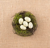 Speckled αυγά ελεφαντόδοντου στη φωλιά Στοκ Εικόνα