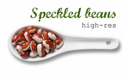 Speckled beans in white porcelain spoon Royalty Free Stock Photography