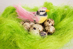 Speckled bird sitting in a nest basket with quail eggs Stock Image