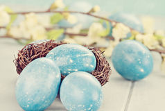 Speckled Blue Eggs in Tiny Nest Royalty Free Stock Images