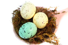 Speckled Easter Eggs Stock Images