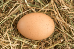 Egg nestled in the straw Stock Photo