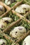 Speckled eggs. Stock Photos